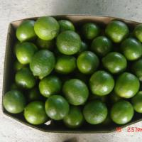 Large picture Lime