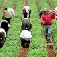 Large picture agricultural workers